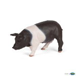 51138 - Black and white sow