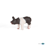 51139 - Black and white piglet