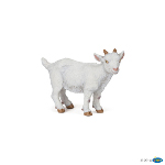51146 - White kid goat