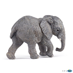 50169 - Young African Elephant