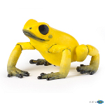 50174 - Equatorial Yellow Frog