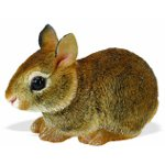 262129 - Baby Eastern Cottontail Rabbit